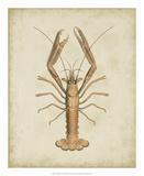 Crustaceans I Giclée-tryk af James Sowerby