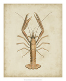 Crustaceans I Giclee Print by James Sowerby