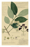 Descubes Foliage & Fruit I Giclee Print by A. Descubes