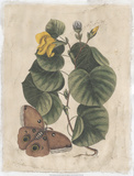 Embellished Catesby Butterfly & Botanical I Prints by Mark Catesby