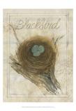 Nest - Blackbird Affiches par Elissa Della-piana