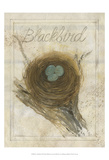 Nest - Blackbird Prints by Elissa Della-piana