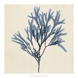 Coastal Seaweed VIII Giclee Print by Vision Studio