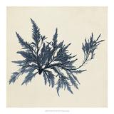 Coastal Seaweed VII Giclee Print by Vision Studio