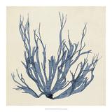 Coastal Seaweed I Giclee Print by Vision Studio