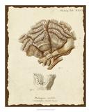 Natura Coral II Giclee Print by Johann Esper