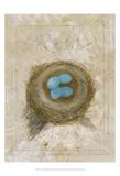 Nest - Robin Prints by Elissa Della-piana