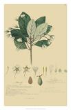 Tropical Descubes IV Giclee Print by A. Descubes