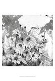 Iza's Garden I Prints by Ingrid Blixt