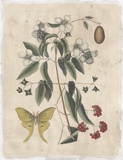 Embellished Catesby Butterfly & Botanical III Art by Mark Catesby