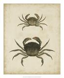 Crustaceans IV Giclée-tryk af James Sowerby