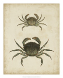 Crustaceans IV Giclee Print by James Sowerby