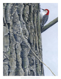 Red Bellied Woodpecker II Giclee Print by Fred Szatkowski