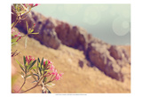 Flowers in Paradise I Prints by Sylvia Coomes