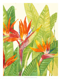 Watercolor Tropical Flowers IV Giclee Print by Tim OToole