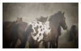 Appaloosa Posters by  PHBurchett