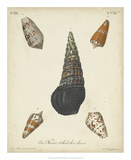 Antique Knorr Shells VIII Giclee Print by  Knorr