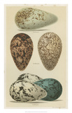 Antique Bird Egg Study I Giclee Print by Henry Seebohm