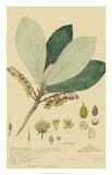 Tropical Descubes I Giclee Print by A. Descubes