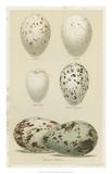 Antique Bird Egg Study II Giclée-trykk av Henry Seebohm