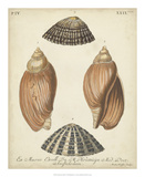 Antique Knorr Shells V Giclee Print by  Knorr