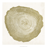 Tree Ring IV Giclee Print by Vision Studio