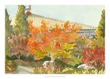 Aquarelle Garden VII Giclee Print by Dianne Miller