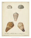Antique Knorr Shells I Giclee Print by  Knorr