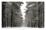 A Snowy Walk IV Prints by James McLoughlin