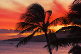 Maui Sunset Photographic Print by  smjoness