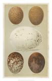 Antique Bird Egg Study III Giclée-trykk av Henry Seebohm