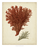 Antique Red Coral V Giclee Print by Vision Studio