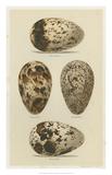 Antique Bird Egg Study VI Giclée-trykk av Henry Seebohm