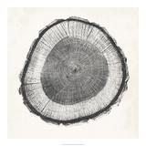 Tree Ring II Giclee Print by Vision Studio