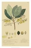 Tropical Descubes II Giclee Print by A. Descubes