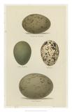 Antique Bird Egg Study V Giclée-trykk av Henry Seebohm