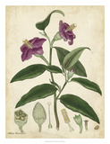 Antique Hibiscus Giclee Print by Henry Andrews