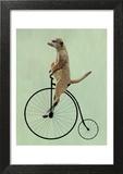 Meerkat on Black Penny Farthing Posters by  Fab Funky