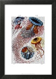 Sea Anemone Posters by  Fab Funky