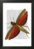 Vintage Grasshopper Prints by  Fab Funky