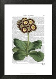 Primula Auricula Red Art by  Fab Funky