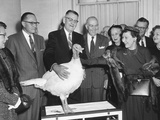 First Lady Mamie Eisenhower Receiving a Live Thanksgiving Turkey Photo