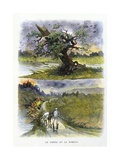 The Oak and the Reed, La Fontaine's Fables Giclee Print by Gustave Fraipont