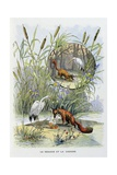 The Fox and the Stork, La Fontaine's Fables Giclee Print by Gustave Fraipont