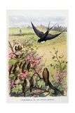 The Swallow and the Little Birds, La Fontaine's Fables Giclee Print by Gustave Fraipont