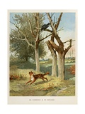 The Fox and the Crow, 'Selected Fontaine's Fables', 1892 Giclee Print by Jules David