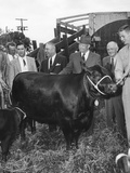 President Eisenhower Receiving an Aberdeen Angus Cow and Calf from the Brandywine Angus Breeders Photo