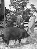 President Eisenhower Presented with a Berkshire Gilt Pig by a 4-H Club Achievement Award Winner Photo