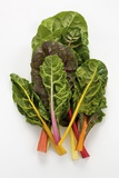 Rainbow Chard Photographic Print by Herbert Lehmann