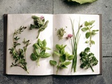 Various Salad Herbs on an Open Book Photographic Print by Walter Cimbal